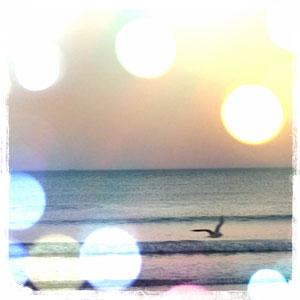Mouette et mer